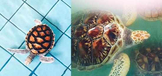 KhL-turtles